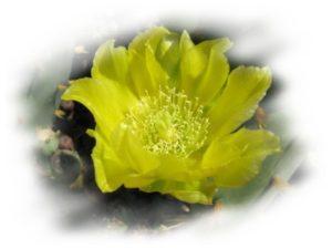KGS-Heilpraxis C. Haaß - gelber Kaktus