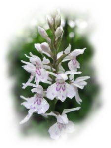 KGS-Heilpraxis C. Haaß - orchidee